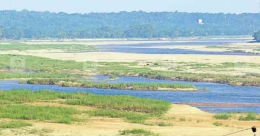 Bharathapuzha to be cleared of thickets, sandbanks