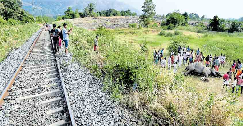 Another elephant killed as train smashes it at Walayar