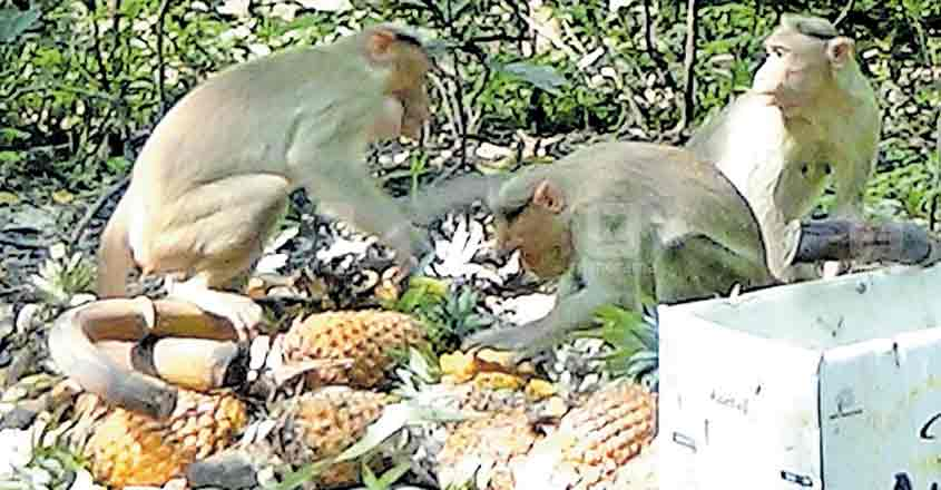 Why this duo's fruit treat for wild animals is special