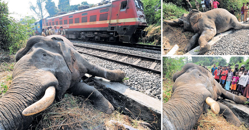 Rogue elephant mowed down by train in Palakkad