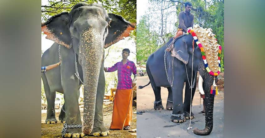 Elephant deception at temple parade! Indira in the guise of tusker Keshavan