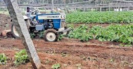 Farmer destroys 3-acre brinjal crop due to low price