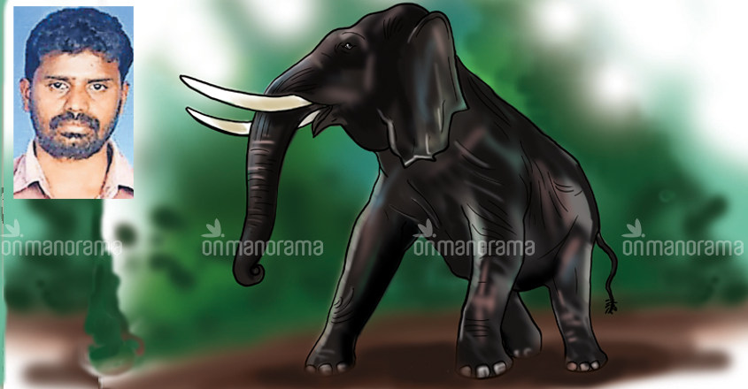Pilgrim trampled to death while saving niece from wild tusker