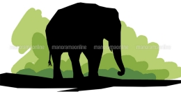 Another wild elephant dies of injuries in Kerala