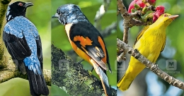 Rare birds among several avians thriving in Pathanamthitta forests