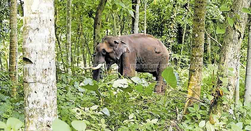 Kerala govt to set up Rs 105 crore elephant rehabilitation centre