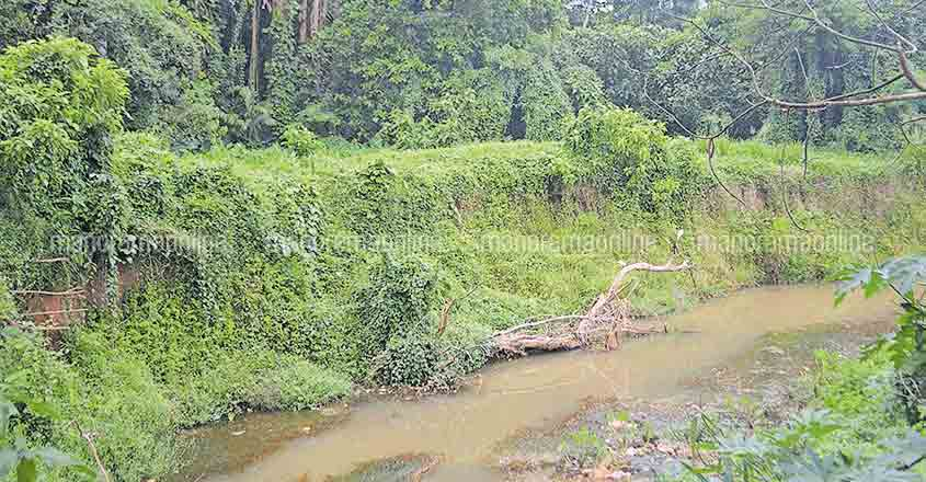 Forest patch in Ranni town faces erosion threat
