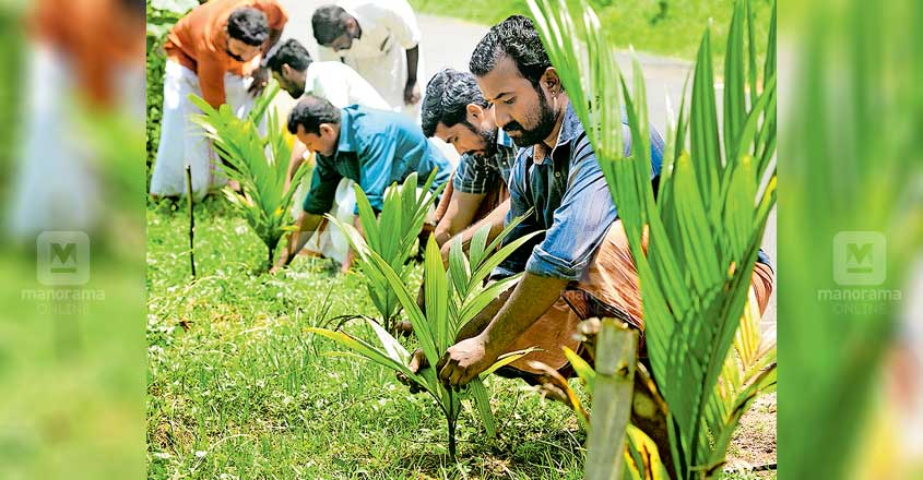 Padayani promoters pitch in for raising areca palms