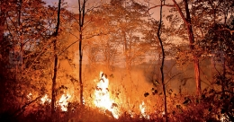 Several acres of forest land in Pathanamthitta gutted in massive fire