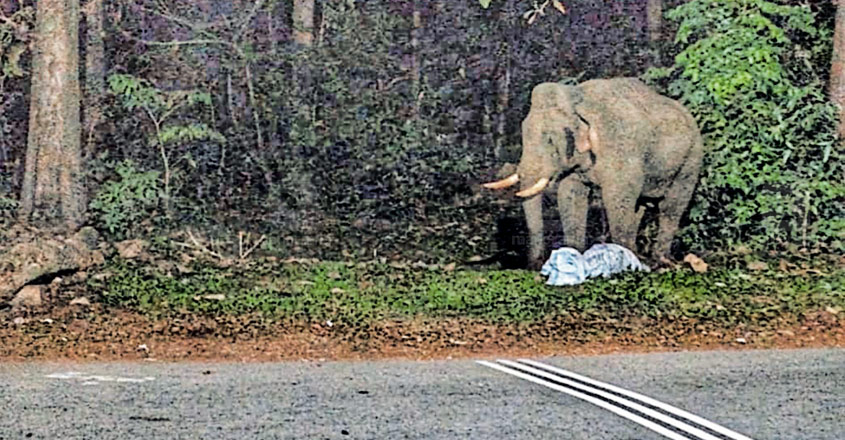Plastic waste pile along Sabarimala route threatens wild animals