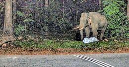 Plastic waste pile along Sabarimala route threatens wild animals