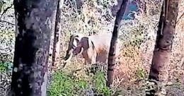 Wild tusker kills forest watcher in Pathanamthitta