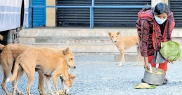 Woman bus conductor feeds stray dogs, birds during lockdown