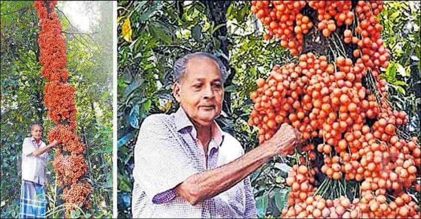 Wild fruit grows aplenty on ex-serviceman's farm