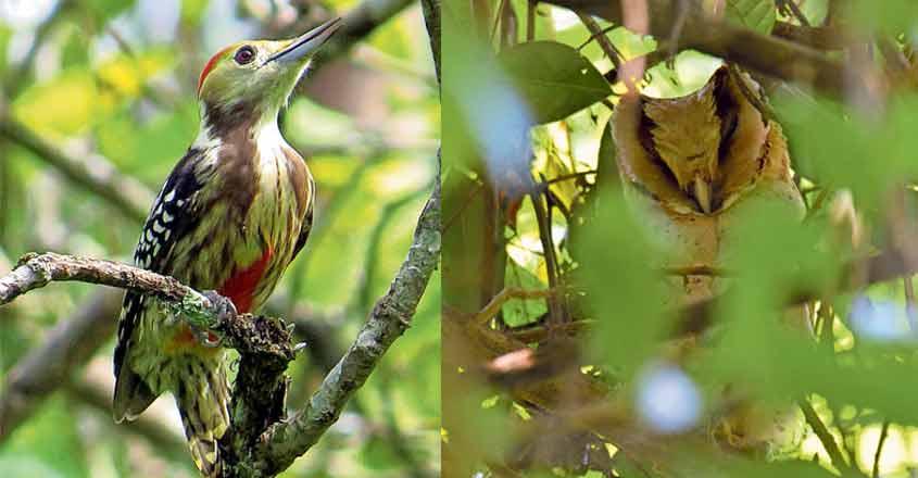 Survey finds 187 species of butterflies, 171 birds at Shendurney Sanctuary