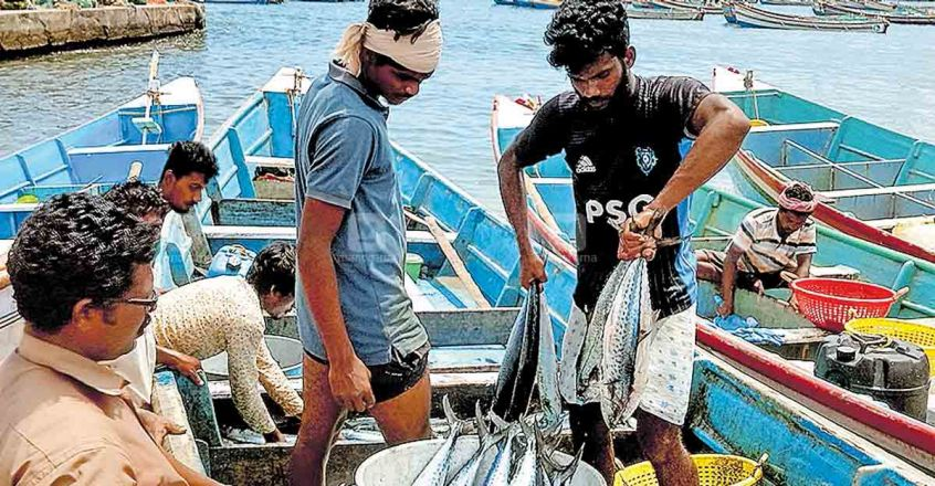 A good catch: Vizhinjam fishermen nets 10,000kg seer fish