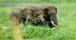 Elephant raids uproot a remote Kerala village