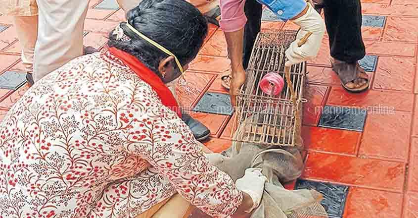 Thrissur village panics after palm civets die of viral infection