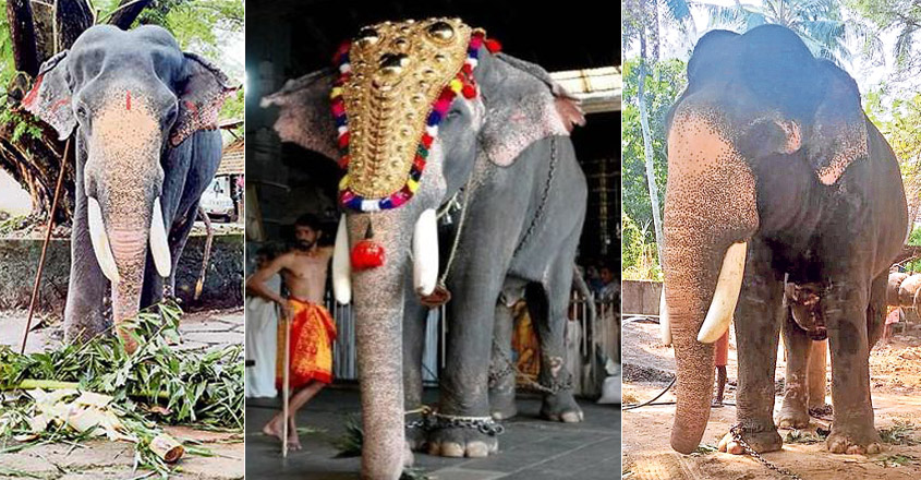 Famed temple elephant Guruvayur Padmanabhan is no more