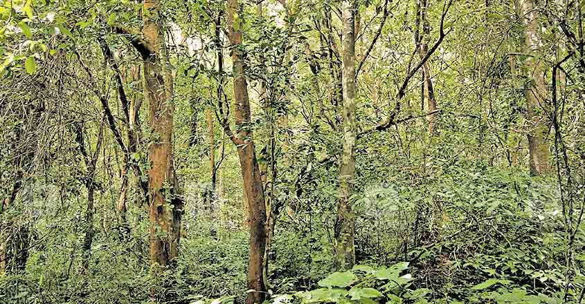 Protests swirl as authorities plan to raze forest area in Wayanad