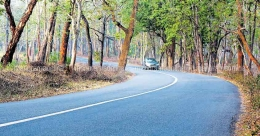 Wayanad travel ban: Action panel miffed as centre favours alternate route