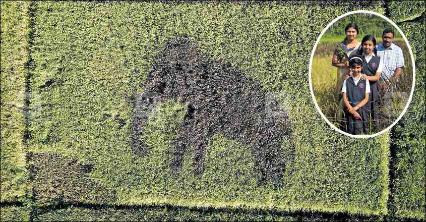 The elephant image that appeared in Praseed Kumar's paddy field in Wayanad.