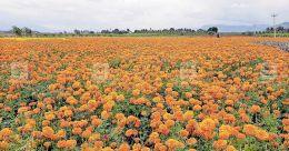 Fillip to floriculture in Wayanad