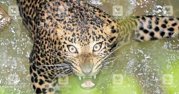 Leopard rescued from well after tense operation