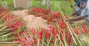 Flower cultivation that earns Rs 4.5 lakh a month with just Rs 60,000 investment