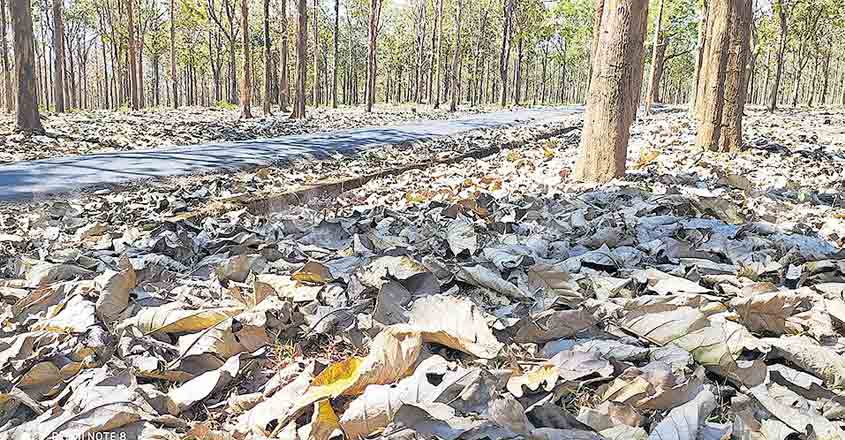 Animal incursions, wildfire threat rife as summer rages in Wayanad