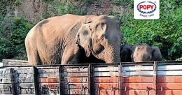 Wild elephants visit this charred lorry daily in Wayanad. Here's why
