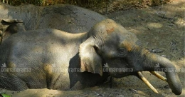 Two wild elephants fall into pond, rescued