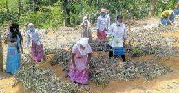 'Potato village' takes shape in Wayanad to meet Kerala's food needs
