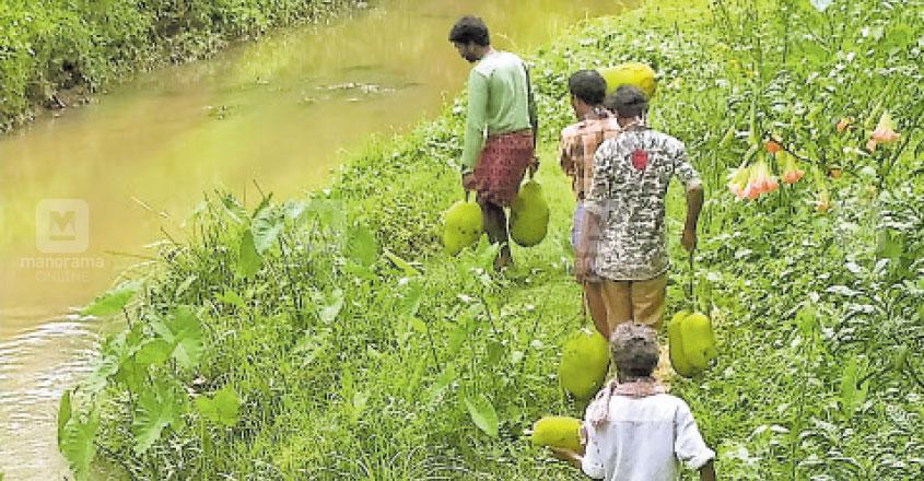 wayanad-giving-jackfruit-to-wild-elephant