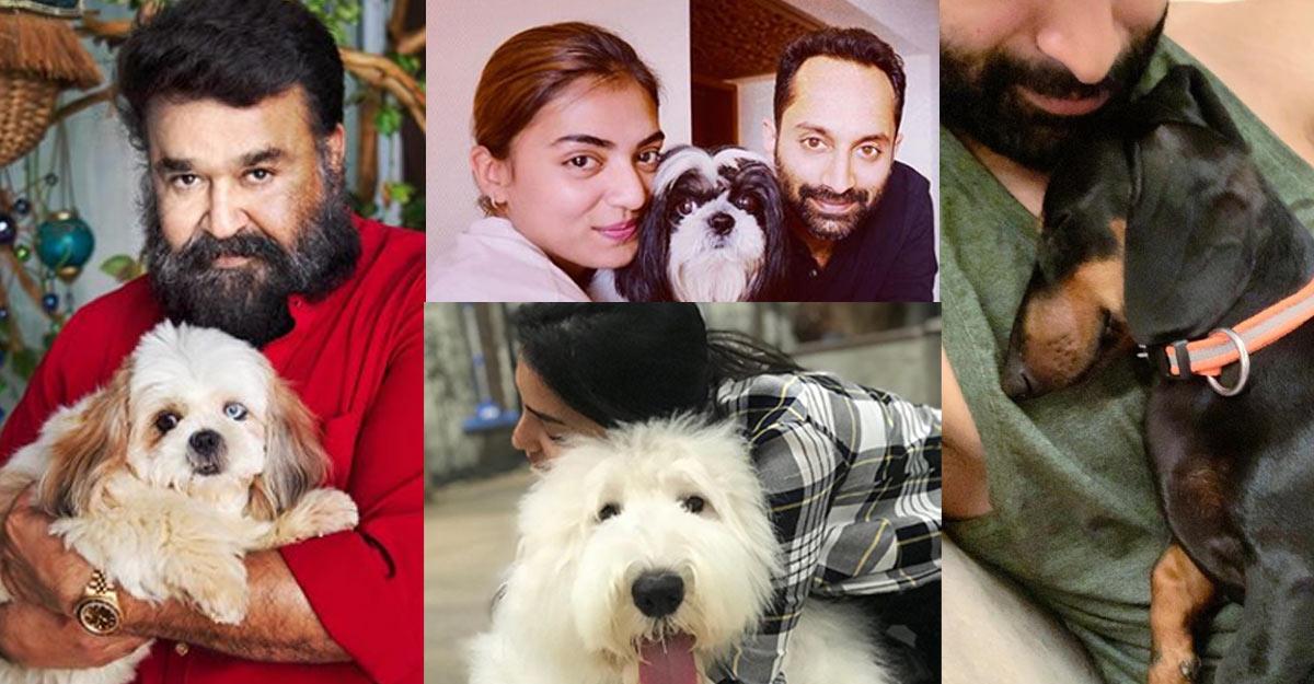 malayalam-celebs-pets-pics