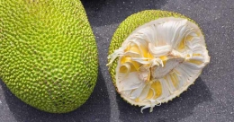 Jackfruit can help fight diabetes, study presented at American forum says