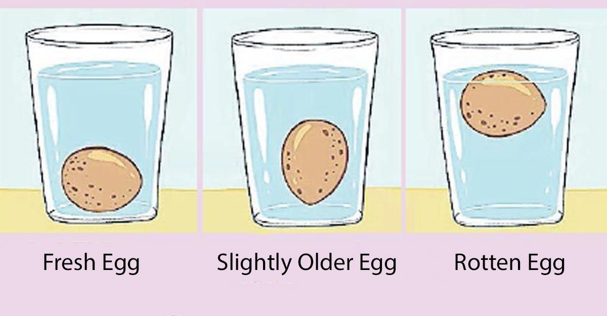 egg-float-test