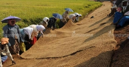 Coir mats secure banks of water channels