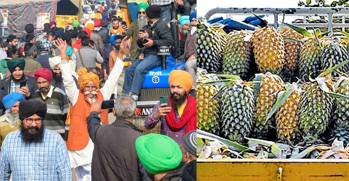Vazhakkulam farmers send truckload of pineapples to Delhi protestors