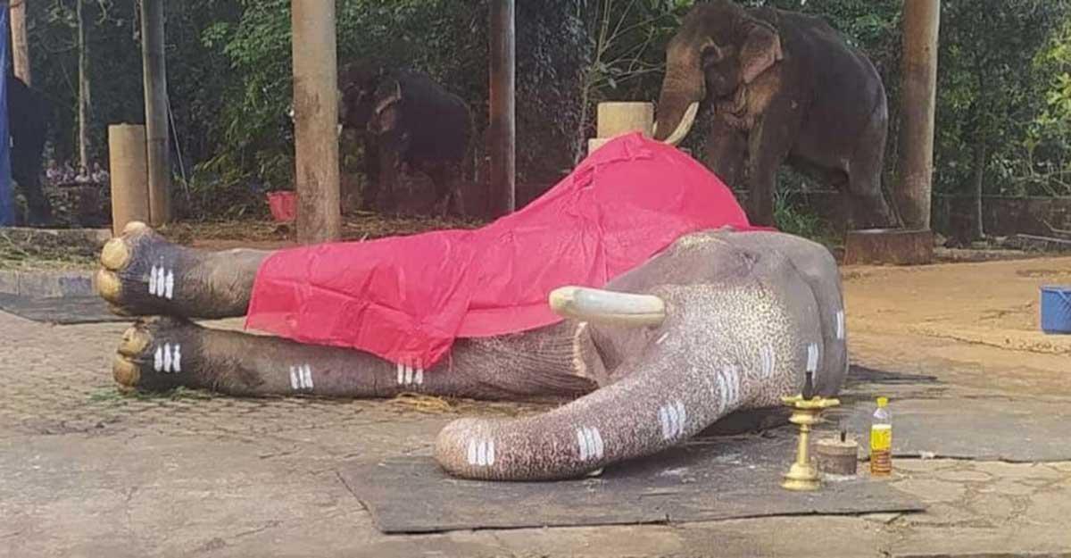 Noted Kerala tusker Mangalamkunnu Karnan's death leaves many teary-eyed