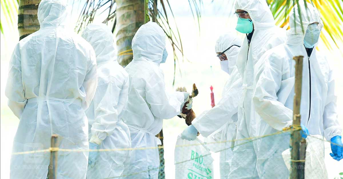 Bird flu outbreak: Central team takes stock of situation in Kerala