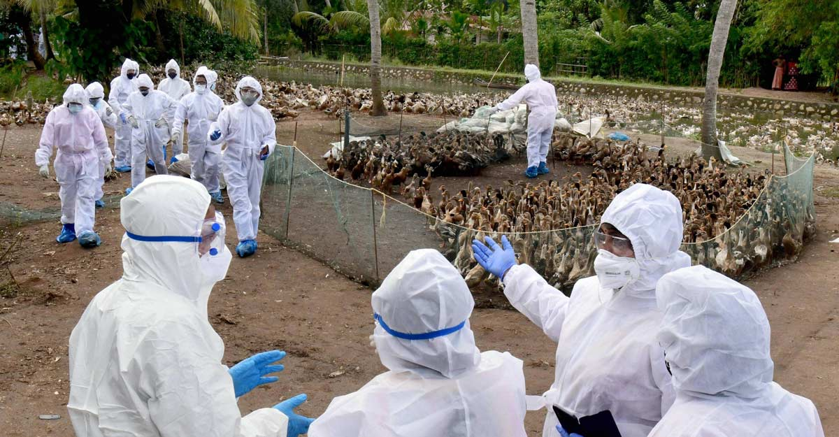Bird flu outbreak: Central team takes stock of situation in Kerala, asks states to be vigilant