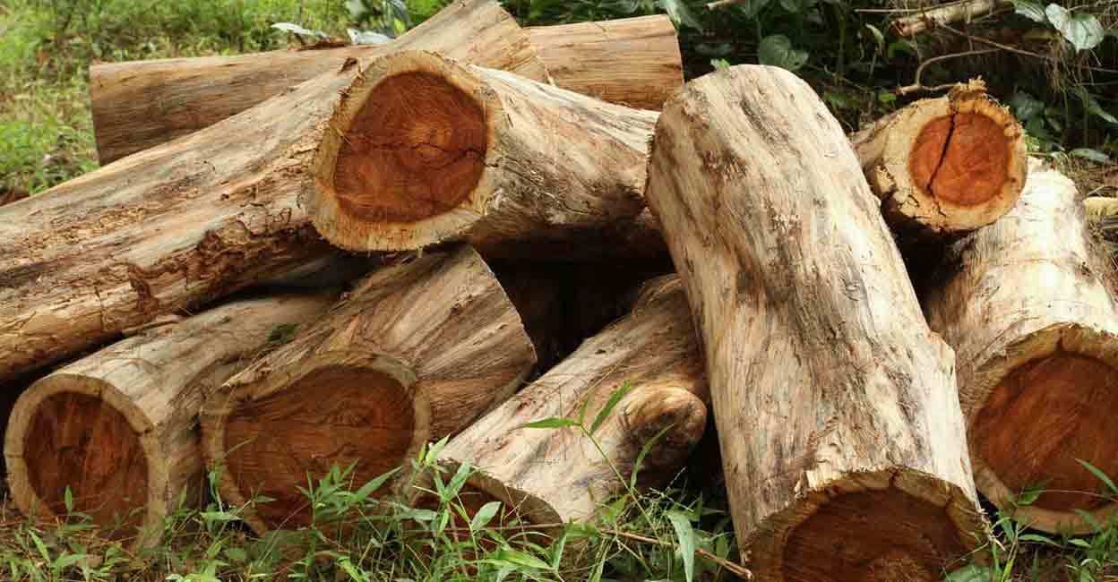 After rosewood scandal, Kerala govt to amend order to allow felling trees on patta land
