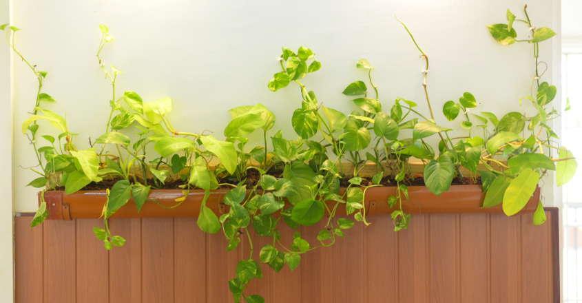 interior-plants-02
