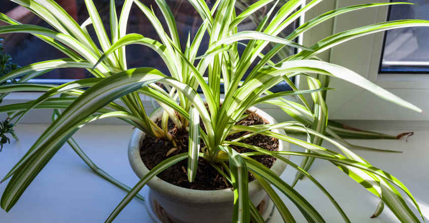 interior-plants-06