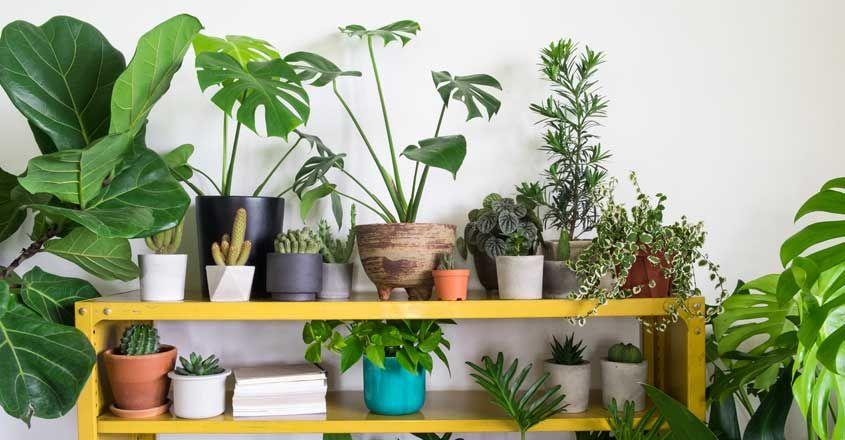 indoor-plants-home