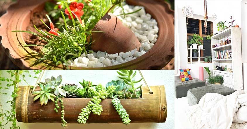 shifa-garden-plants-01-c