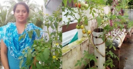 Vegetables from discarded PVC pipes: Simi turns terrace her farm