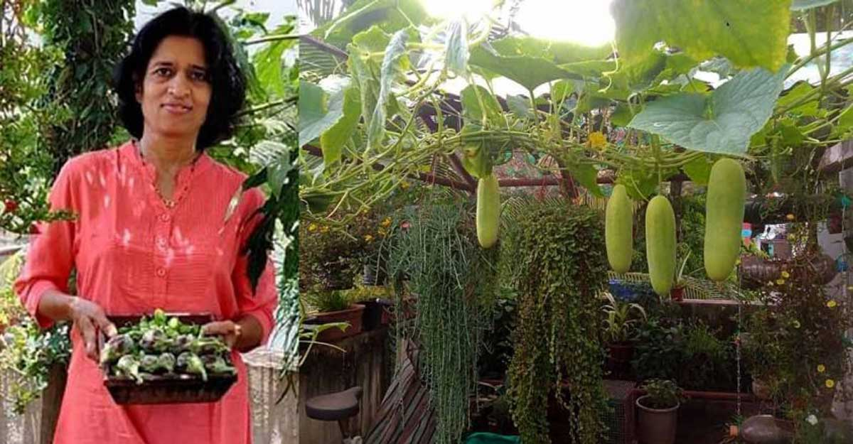 Grow your own food - Livemint