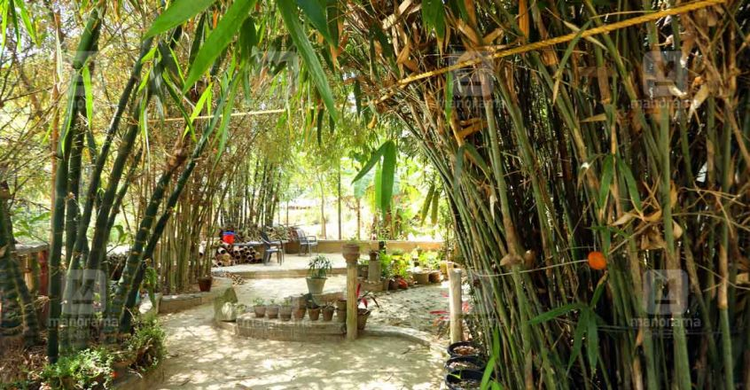pond-bamboo-house-plot